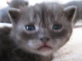 Foto 3 Katze Baby Kitten