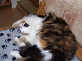 Foto 3 Katze Entlaufen