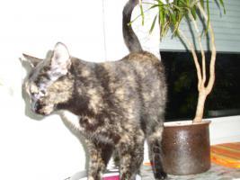 Foto 6 Katze Lilly