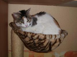 Katze Tiny