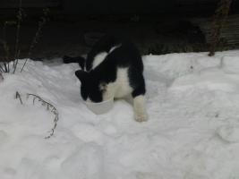 Foto 2 Katze sucht neues Zuhause