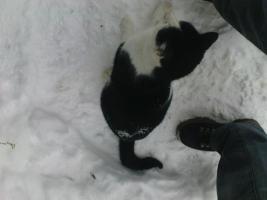 Foto 5 Katze sucht neues Zuhause