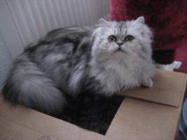 Katze zu verkaufen