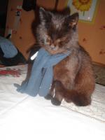 Katze & Karter zu verschenken