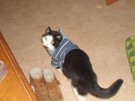 Foto 2 Katze & Karter zu verschenken