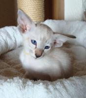 Foto 3 Katzen