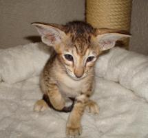 Foto 6 Katzen