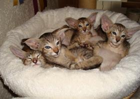 Foto 10 Katzen