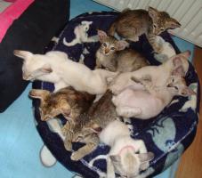 Foto 12 Katzen