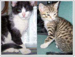 Katzen Cora und Kikki suchen neues Zuhause