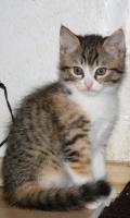 Foto 2 Katzenbabies abzugeben