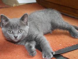 Foto 3 Katzenbabies abzugeben