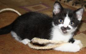 Foto 5 Katzenbabies abzugeben