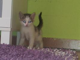 Foto 3 Katzenbabys