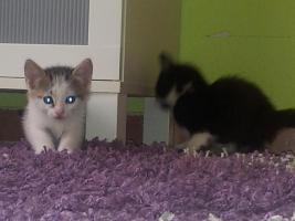 Foto 4 Katzenbabys