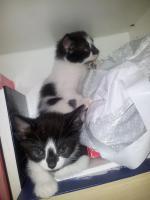 Foto 6 Katzenbabys