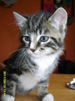 Foto 2 Katzenbabys 11 Wochen alt