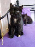 Foto 4 Katzenbabys 11 Wochen alt