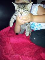 Katzenbabys 8 Wochen alt abzugeben