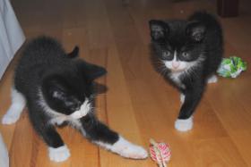 Foto 3 Katzenbabys suchen liebevolles, neues Zuhause