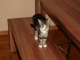 Katzendame 6 Monate