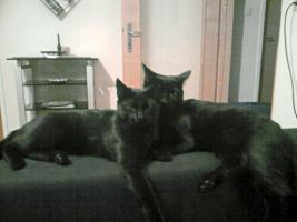 Katzengeschwisterpärchen sucht neues zu Hause mit Garten