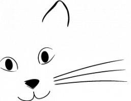 Katzenseminar in HH: Tellington Touch für Katzen