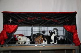 Foto 2 Katzenspielzeug, Schlafkissen, Laserpointer, alles neu