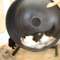 Foto 7 Katzenspielzeug, Schlafkissen, Laserpointer, alles neu
