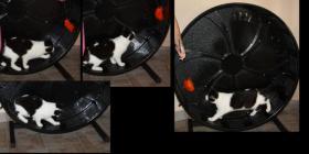 Foto 8 Katzenspielzeug, Schlafkissen, Laserpointer, alles neu