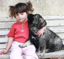 Foto 3 Kaukasischer Owtscharka mit Papiere FCI