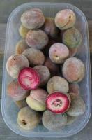 Foto 5 Kerne vom roten Weinbergpfirsich, Samen für eigenen Pfirsichbaum