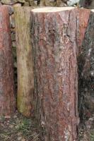 Foto 2 Kiefern-Hackklotz zum Brennholz selber hacken, 80cm hoch