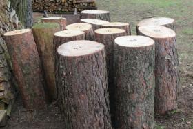 Foto 3 Kiefern-Hackklotz zum Brennholz selber hacken, 80cm hoch