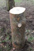 Kiefern-Hackklotz um selber sein Brennholz zu hacken