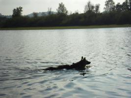 Foto 24 Kinder und Haustier freundlicher Ferienpark Falkenstein - Bayerischer Wald - Hunde und Katzen willkommen