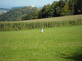 Foto 23 Kinder und Haustier freundlicher Ferienpark - Katzen und Hunde willkommen - Bayerischer Wald