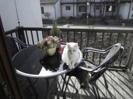 Kinder und Haustier freundlicher Ferienpark - Katzen und Hunde willkommen - Bayerischer Wald
