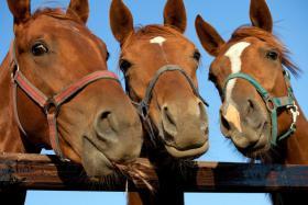 Kinderferien auf dem Ponyhof