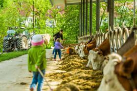 nach dem Kirschenpflücken Kühe füttern
