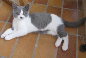 Foto 2 Kitten