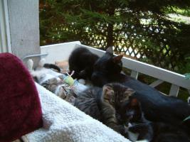 Foto 5 Kittenduo zu verschenken - Süße Sonntagsmaikätzchen
