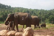 Klassische Rundreise durch Sri Lanka