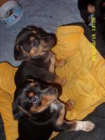 Kleine Hundebabys!!!