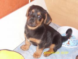 Foto 3 Kleine Hundebabys!!!