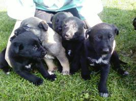 Foto 2 Kleine Hundewelpen suchen ein neues zuhause
