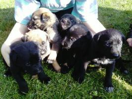 Foto 3 Kleine Hundewelpen suchen ein neues zuhause