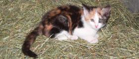 Foto 2 Kleine Spende für meine Katzen