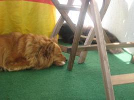 Foto 2 Kleine süsse Hündin sucht ein Zu Hause
