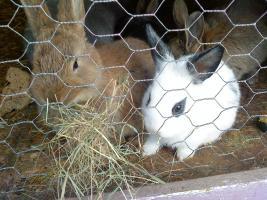Kleine süße Kaninchen suchen ab sofort ein liebevolles zu Hause.